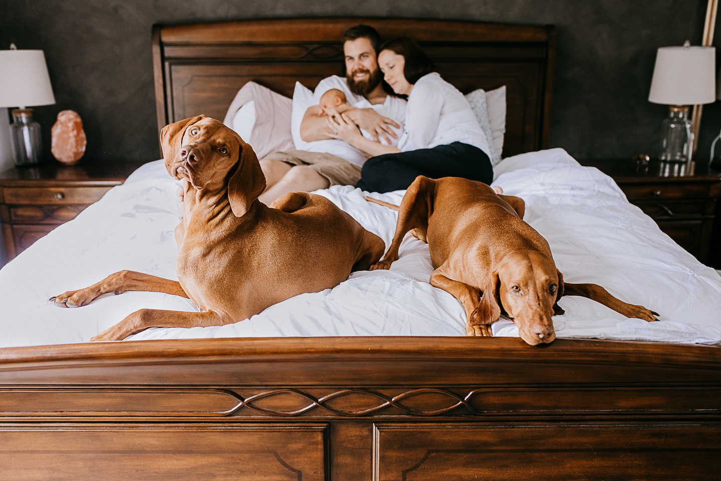 At Home Newborn Session with Dogs